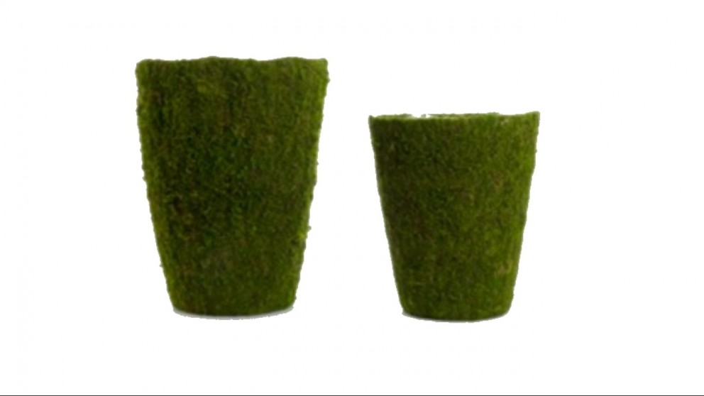 Moss Pots Set of 2