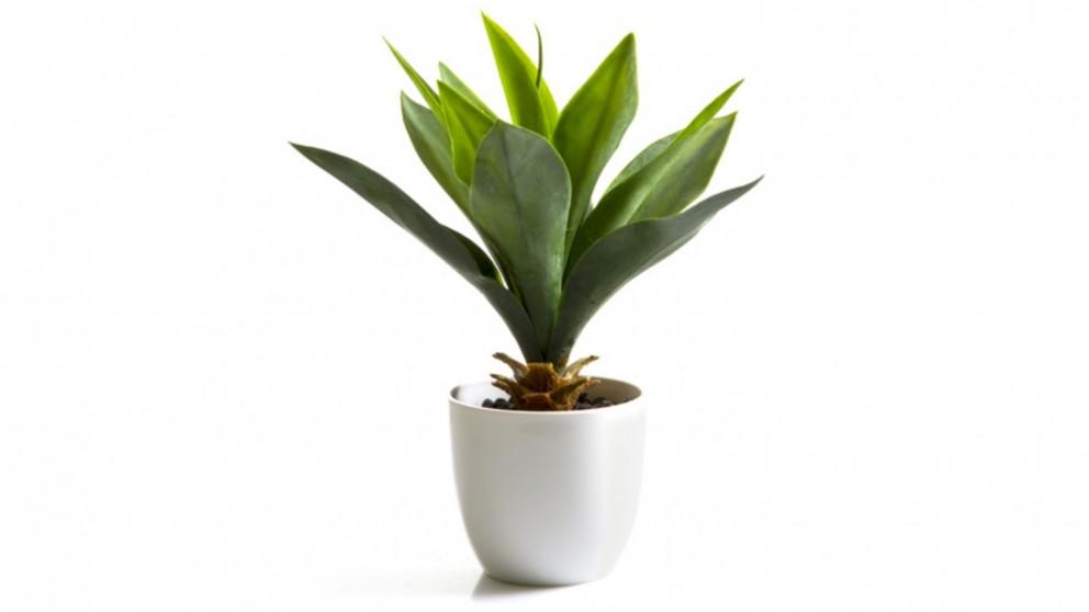 Buy Agave Bush 27cm Potted Plant Domayne Au