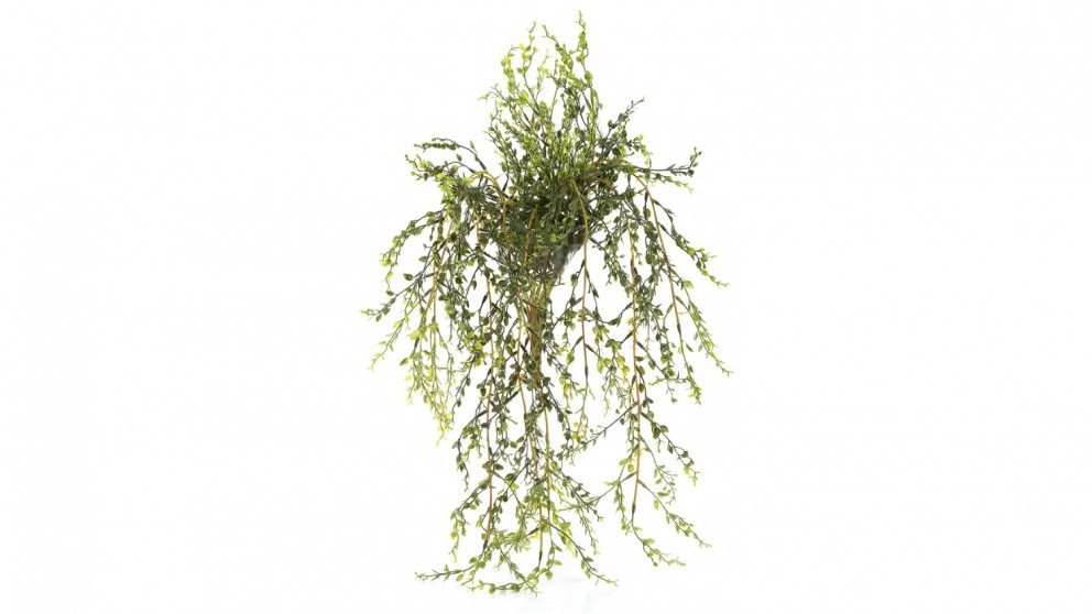 Bush Kiwi 80cm Hanging Vine