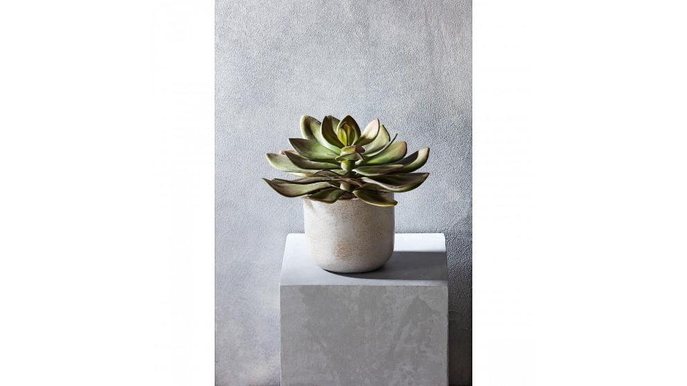 Desert Succulent 20cm Potted Tree