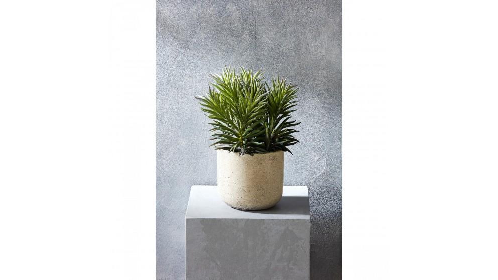 Needle Succulent Decorator 23cm Plant